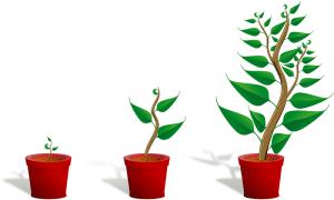 Kolme erikokoista kasvia